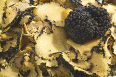 Truffles. Close up on the white stock image