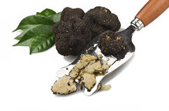 Truffles Stock Images