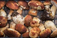 Truffles and mushrooms Italian delicacies italy europe. Truffles and fresh mushrooms porcini Italian delicacies for eat italy europe stock image