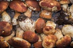 Truffles and mushrooms Italian delicacies italy europe. Truffles and fresh mushrooms porcini Italian delicacies for eat italy europe stock images