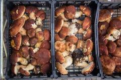 Truffles and mushrooms Italian delicacies italy europe. Truffles and fresh mushrooms porcini Italian delicacies for eat italy europe royalty free stock photo