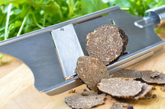 Truffles with slicer. Fresh black truffles / tuber uncinatum stock photography