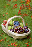 Trug of summer fruit Royalty Free Stock Image