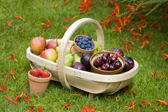Trug of summer fruit Royalty Free Stock Photography