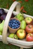 Trug of summer fruit Stock Photo