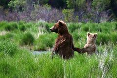 Truie et petit animal de l'Alaska Photographie stock libre de droits