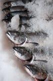 Truite arc-en-ciel sur la glace Photos libres de droits