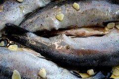 Truite avec l'ail et l'huile d'olive Image libre de droits