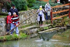 Truite contagieuse d'homme par l'ortie dans l'étang Pisciculture Photographie stock libre de droits