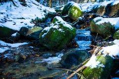 Truite de ruisseau d'hiver Photos libres de droits