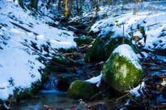 Truite de ruisseau d'hiver Images libres de droits