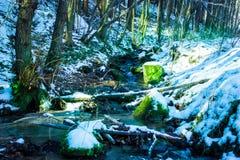 Truite de ruisseau d'hiver Photo stock