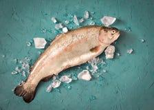 Truite fraîche avec de la glace sur la table Image libre de droits