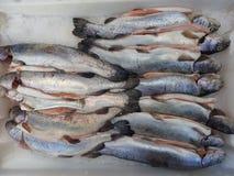 Truite fraîche sur la glace Crochet, poisson sur le marché, fin  images stock