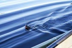 Truite impitoyable sur la ligne de pêche photos libres de droits