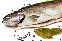 Truite saumonée fraîche Image libre de droits