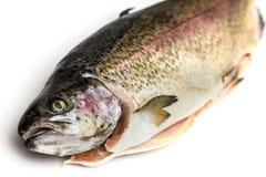 Truite saumonée fraîche Photographie stock libre de droits