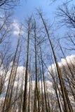 Truks alto e ramos Imagens de Stock