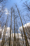 Truks grand et branches images stock