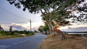 Trulifeboom van het Leven Stock Afbeeldingen