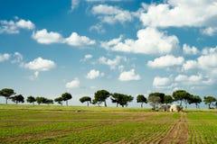 Trulli auf landwirtschaftlicher Apulian-Küste lizenzfreies stockfoto