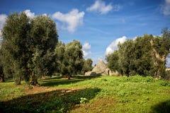 Trulli com bosque verde-oliva Val d 'Itria - Puglia Apulia - Itália imagens de stock royalty free