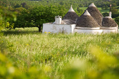 Trulli houses in green landscape, rural scene Royalty Free Stock Photos