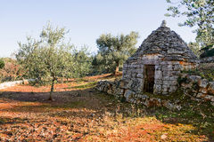 Trulli and olive tree Royalty Free Stock Images