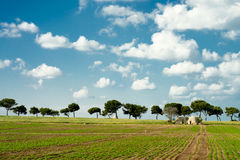 Trulli på den jordbruks- Apulian kusten Royaltyfri Foto