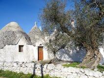Trulli, tradycyjni starzy domy z drzewem oliwnym w Puglia, Włochy fotografia royalty free