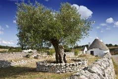 trullo drzew oliwnych Zdjęcia Royalty Free