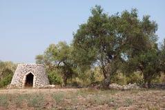 trullo drzew oliwnych Zdjęcia Stock
