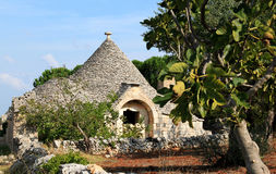 Trullo i en fruktträdgård nära Alberobello, Italien Royaltyfri Foto