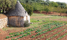 Trullo in kitchen garden near Alberobello, Italy. You can find many trulli in the Italian town of Alberobello and its neighbourhood. A trullo is a traditional Royalty Free Stock Photography