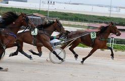 Trumpet lopp för hästsele, i att panorera för Palma de Mallorca kapplöpningsbana royaltyfria foton