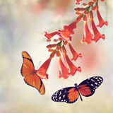 Trumpet Vine and Butterflies Stock Photography