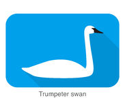 trumpeter swan, cartoon flat icon, vector illustration Royalty Free Stock Images