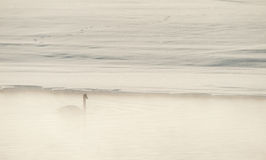 Trumpeter swans  (Cygnus buccinator) in the fog. Royalty Free Stock Photos