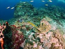 Trumpetfish and blue seastar Royalty Free Stock Photography