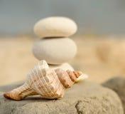 Trumpetsnäckaskal- och brunnsortstenar på stranden Fotografering för Bildbyråer