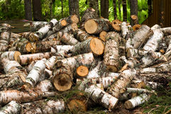 Truncate wood. Round old timbers ready to go in processing Royalty Free Stock Images