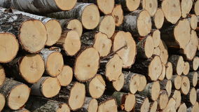Truncated tree log close. Closeup of truncated tree trunk log stack. Felling sustainable industry stock footage