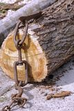 Truncated tree trunk hooked to a chain. For transportation Royalty Free Stock Photography
