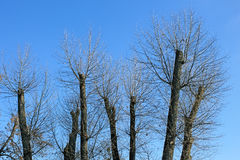 Truncated of treetops Stock Photography