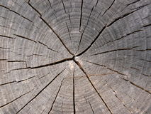 Trunk. Tree trunk with some cracks Stock Photography