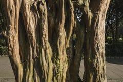 trunk photo stock