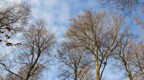 trunk Arbre sans feuilles en hiver et ciel nuageux images stock