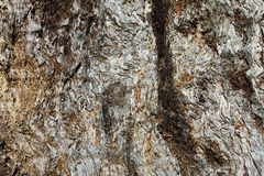 Trunk background. Close view of the tree trunk background Royalty Free Stock Photos