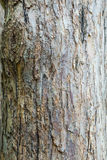 The trunk and bark of an adult tree of Apple. Textured background Stock Photos