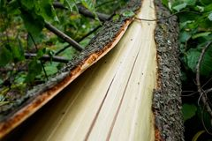 The trunk and bark of a broken tree. concept: the consequences of bad weather royalty free stock images